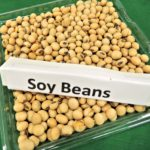 Soy Protein Ingredients Used To Make Soy Protein Foods